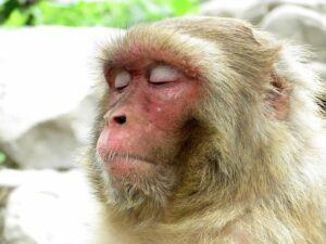 Even A Monkey Needs to relax and Enjoy